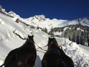 horse pulled sleigh Salzburg